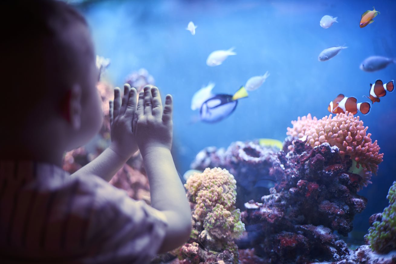 Big day out at the aquarium for children at Derrimut